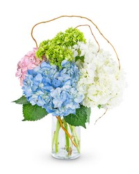 Sweet Hydrangea from Blythe Flowers in Ottawa, IL