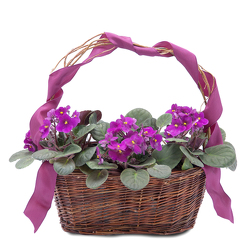 Very Violet Basket from Blythe Flowers in Ottawa, IL