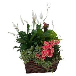 Living Blooming  Garden Basket  from Blythe Flowers in Ottawa, IL