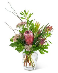 Posh Protea from Blythe Flowers in Ottawa, IL