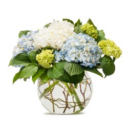 Mighty Hydrangea from Blythe Flowers in Ottawa, IL